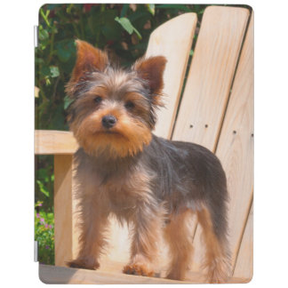 Yorkshire Terrier standing on wooden chair iPad Cover