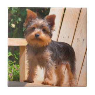 Yorkshire Terrier standing on wooden chair Small Square Tile