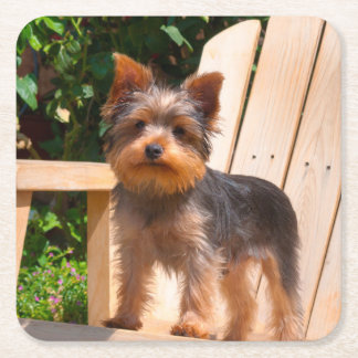 Yorkshire Terrier standing on wooden chair Square Paper Coaster