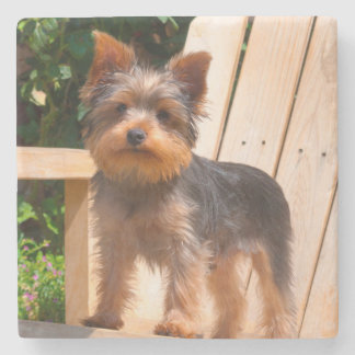 Yorkshire Terrier standing on wooden chair Stone Coaster