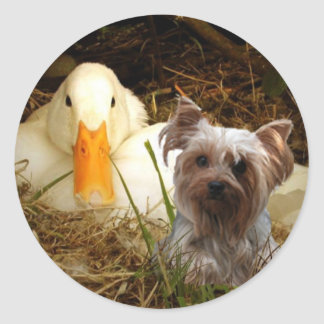 Yorkshire Terrier Sticker With Duck