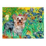 Yorkshire Terrier (T) - Irises Postcard
