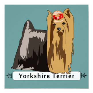 Yorkshire Terrier with Breed name Card