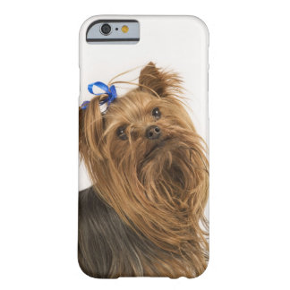Yorkshire Terrier / Yorkie. Lively breed of Barely There iPhone 6 Case