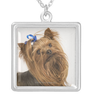 Yorkshire Terrier / Yorkie. Lively breed of Silver Plated Necklace