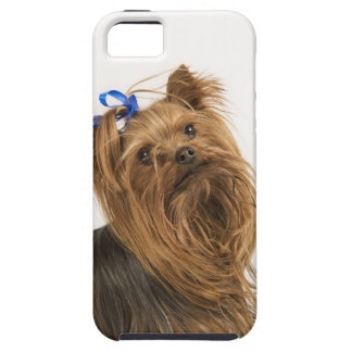 Yorkshire Terrier / Yorkie. Lively breed of Tough iPhone 5 Case