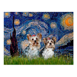 Yorkshire Terriers (13 and 15) - Starry Night Postcard