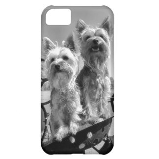 Yorkshire Terriers iphone 5 Case