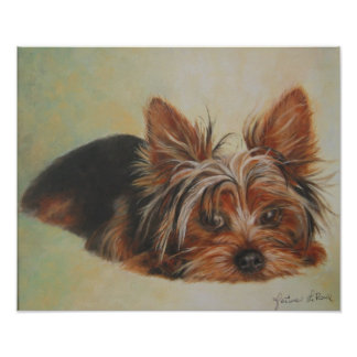 Yorshire Terrier Poster
