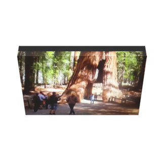 Yosemite Large Trees Canvas Print