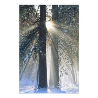 Yosemite National Park - Sun rays streaming Photo