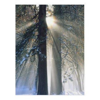 Yosemite National Park - Sun rays streaming Postcard