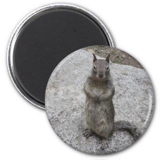 Yosemite Squirrel Magnet