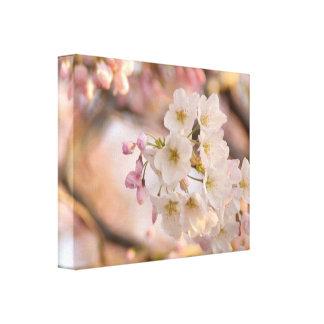 Yoshino Cherry Blossom Photograph Print
