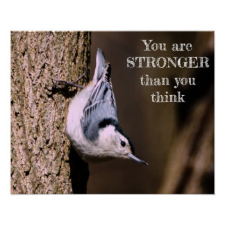 You Are Stronger White-Breasted Nuthatch Poster