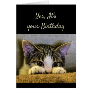 You can't Hide It's your Birthday Cute Kitten Card