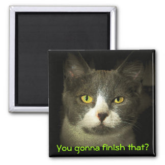 You gonna finish that? Hungry Kitty Square Magnet