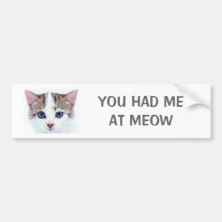 YOU HAD ME AT MEOW BUMPER STICKER BLUE EYED KITTEN