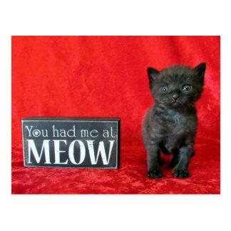 You Had Me At Meow - Pepper (aka Jelly Bean) Postcard
