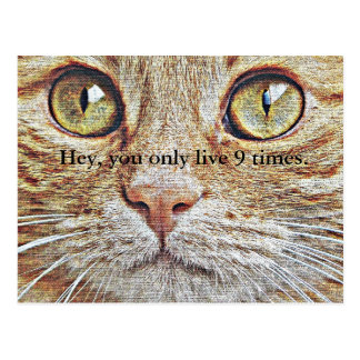 """You only live 9 times"" cat postcard"