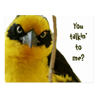 """You talkin' to me"" sassy wisecrack by LOLBirds Postcard"