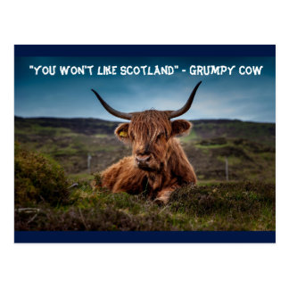 """You won't like Scotland"" - Grumpy Cow Postcard"