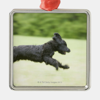 Young (5 months) black Briard (Berger de Brie), Christmas Ornament