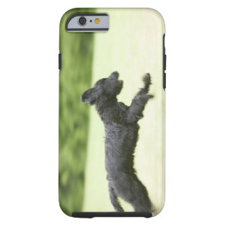 Young (5 months) black Briard (Berger de Brie), Tough iPhone 6 Case