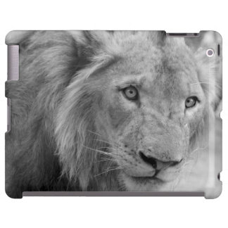 Young African Lion (young lion)