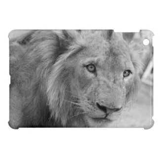 Young African Lion (young lion) Cover For The iPad Mini