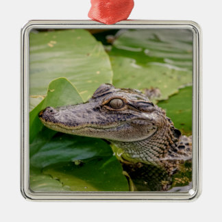 Young Alligator Christmas Ornament
