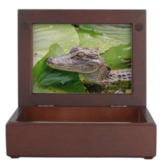 Young Alligator Keepsake Box