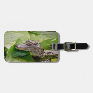 Young Alligator Luggage Tag