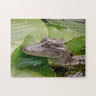 Young Alligator Puzzles