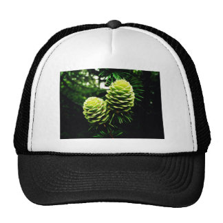 Young And Beautiful Mesh Hats