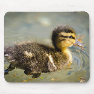 Young Baby Duck Swimming In Water Mouse Pad