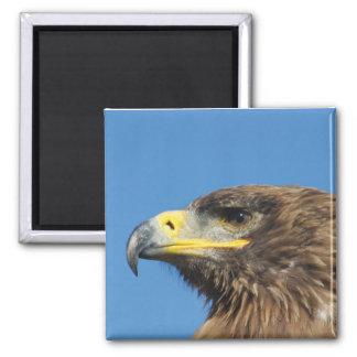 Young Bald Eagle Closeup Square Magnet