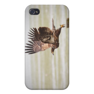 Young Bald Eagle iPhone 4 Covers