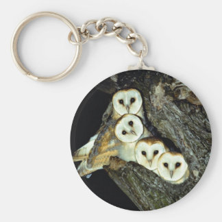 Young barn-owls, 9 weeks old basic round button key ring