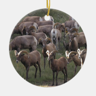 Young Bighorn Sheep Christmas Ornament