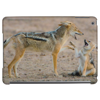 Young Black Backed Jackal (Canis Mesomelas) Pup