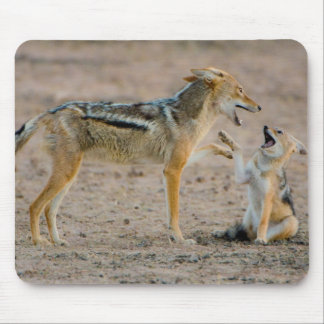 Young Black Backed Jackal (Canis Mesomelas) Pup Mouse Pad