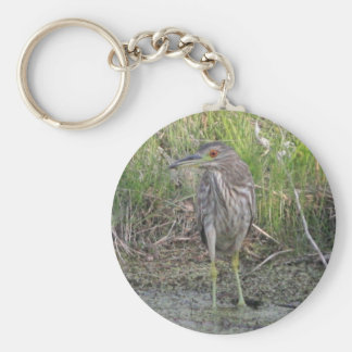 Young Black-crowned Night-heron Basic Round Button Key Ring