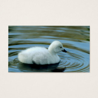 Young Black Neck Swan Business Cards