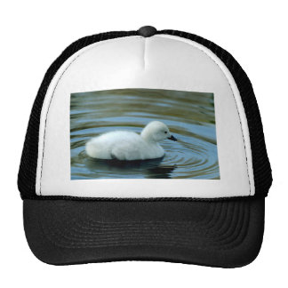 Young Black Neck Swan Hat/Cap Cap