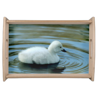 Young Black Neck Swan Serving Tray
