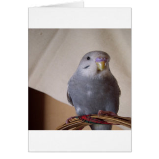 young blue budgie pillow card