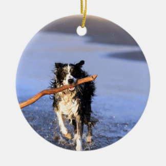 Young border collie dog fetching stick on beach christmas ornament