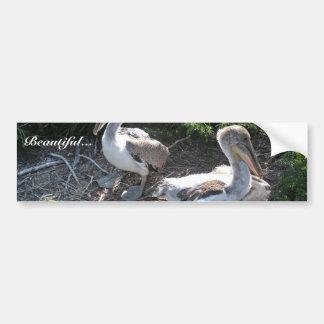 Young brown pelicans bumper sticker