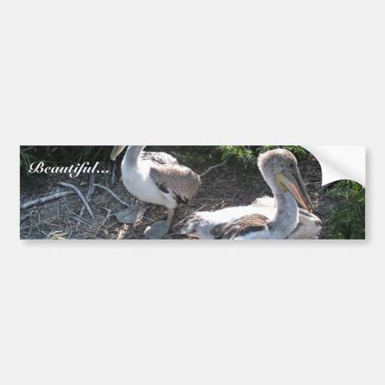Young brown pelicans bumper sticker